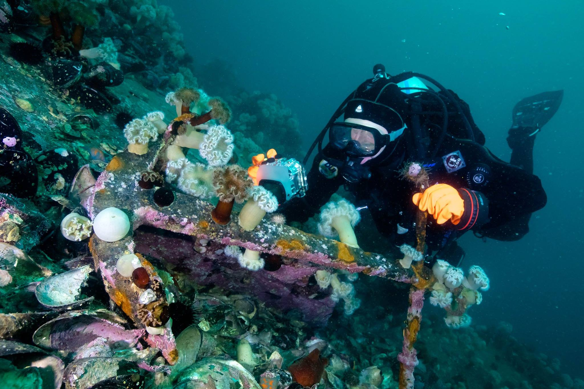 Scuba diving in Primorye - more then just travel