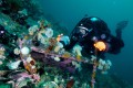 Scuba diving in Primorye